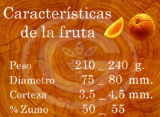 Washington Navel - Características de la fruta